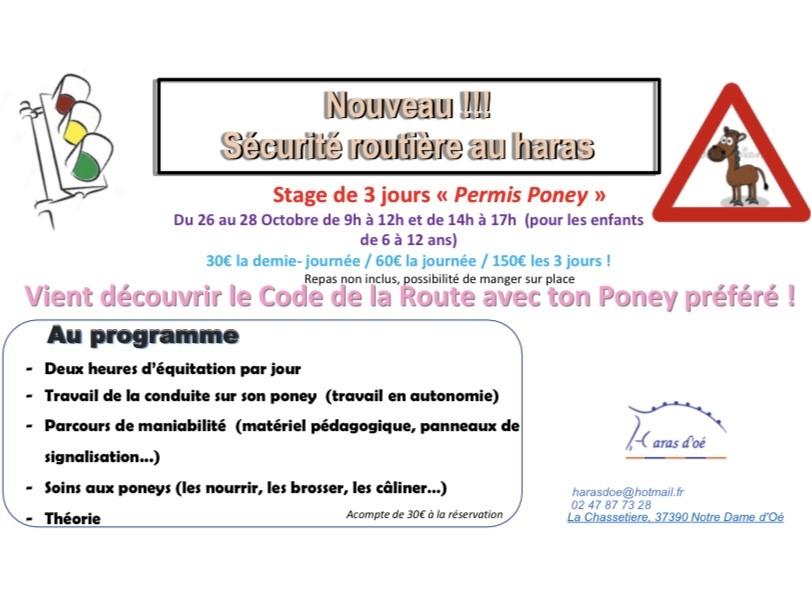 stage permis poney